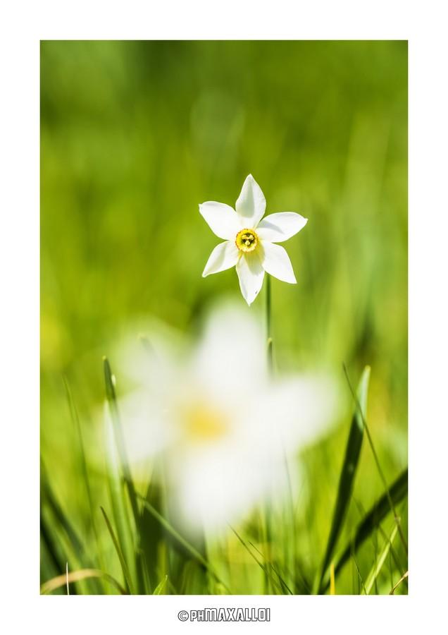 Flowers 01_3