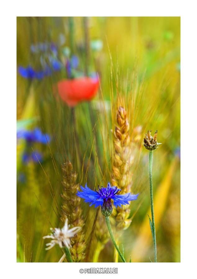 Flowers 03_2