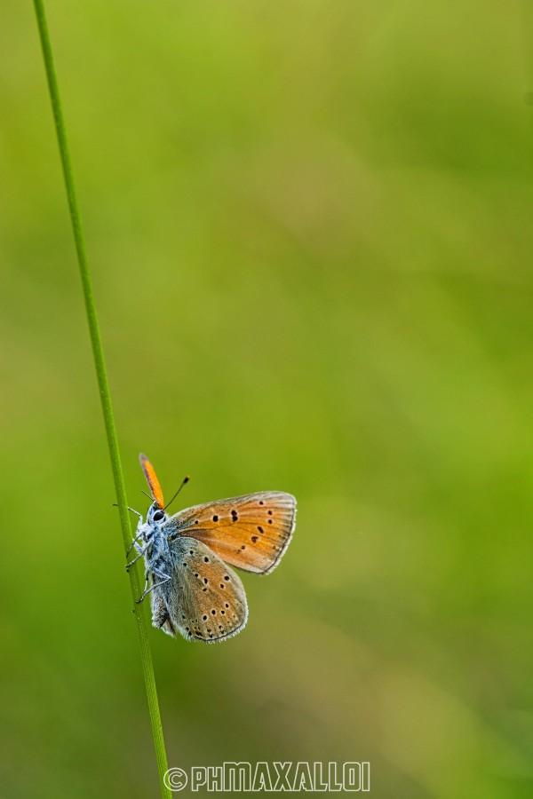"""""""Quella che il bruco chiama fine del mondo, il resto del mondo chiama farfalla.""""  (Richard Bach)"""
