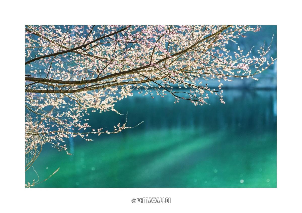 Anche gli alberi a primavera scrivono poesie. E gli stupidi pensano che siano dei fiori. (Donato Di Poce)